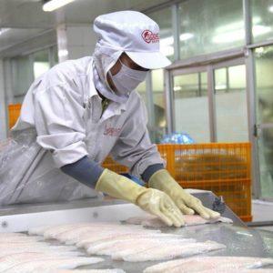 Producción Acuícola De Vietnam Aumenta Seis Por Ciento En Primer Cuatrimestre De 2018