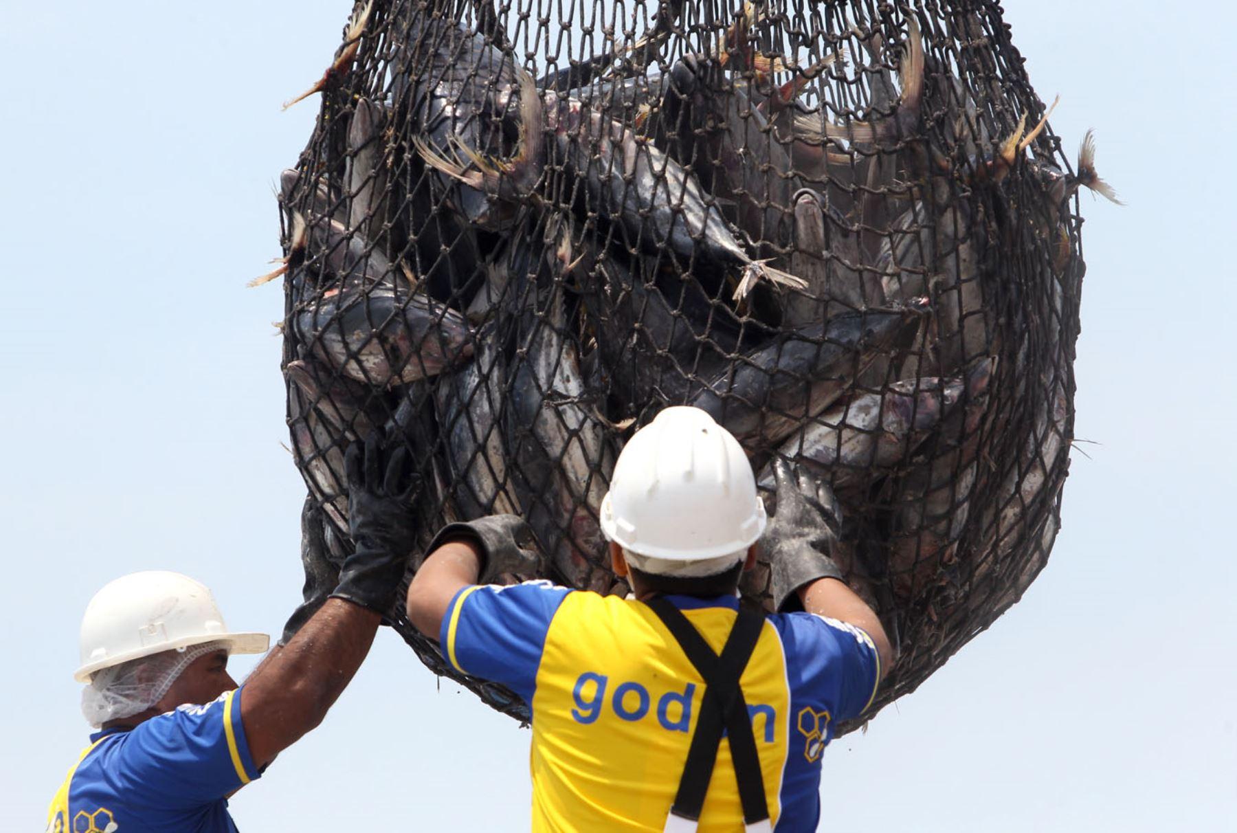 Exportación Pesquera Para Consumo Humano Habría Crecido Más De 80% Entre Enero Y Mayo En Perú