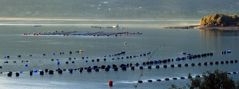 Acuicultura Chile Pescamesa De Trabajo 11