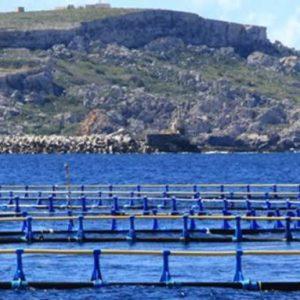 Un Sistema De Bajo Coste Controla Calidad De Agua Y Peces En Piscifactorías En España