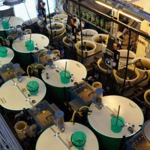 Monitorizan La Calidad Del Agua En Sistemas De Recirculación De Acuicultura En Finlandia