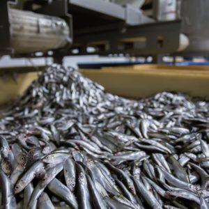 El Sector De Los Productos De La Pesca Y La Acuicultura En España