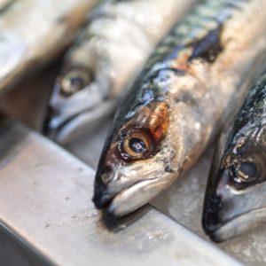 'Know To Protect', El Proyecto Que Quiere Sensibilizar E Impulsar Los Productos Pesqueros Y Acuícolas Sostenibles En España