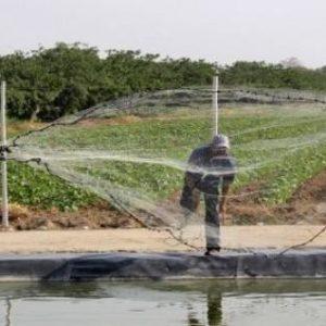 Produce Perú: Acuicultura Crecerá Alrededor De 12% Este Año Y Revertirá Su Caída Del 2017