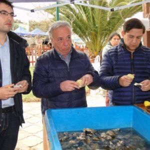 Cultivo De Ostra Japonesa: Iniciativa Pionera Permitirá Diversificación Acuícola En Pescadores De La Región Chilena
