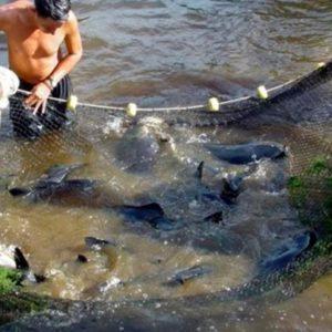 FONDEPES Y Petroperú Firman Convenio Para Impulsar La Acuicultura