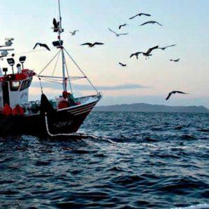 Unas 700 Especies Se Utilizan En La Acuicultura A Nivel Global, Según La FAO