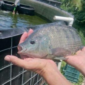 Instalan Cerco Sanitario Ante Contaminación De Pescado En Otros Estados