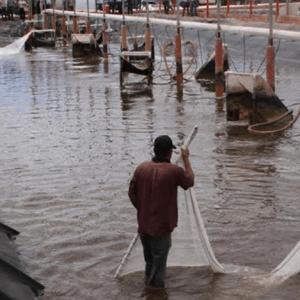 Sonora, A La Vanguardia En Inocuidad Acuícola