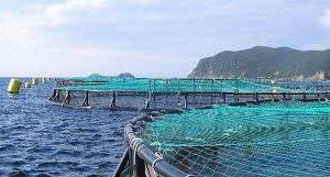 Salmoneros Chilenos Duplican Envíos A China Y Crecen En Rusia