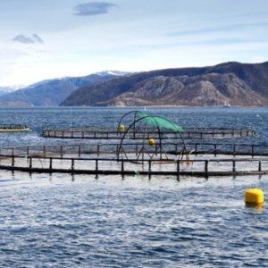 Asignaron U$S 95 Mil Para Estudios De Acuicultura Sustentable En Canal Beagle, Argentina