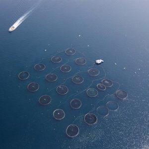 Mar Convoca En Arousa Seis Cursos Para El Cultivo De Moluscos Y Peces