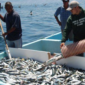 El Desarrollo Sostenible Del Sector Pesquero Y Acuícola En México (I)