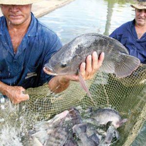 Michoacán, Primer Lugar Nacional En Sanidad Acuícola: Compesca