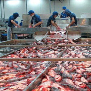 Vietnam Entre Principales Exportadores Mundiales De Pescado
