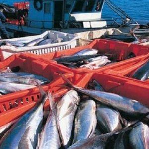 El Desarrollo Sostenible Del Sector Pesquero Y Acuícola En México (II)