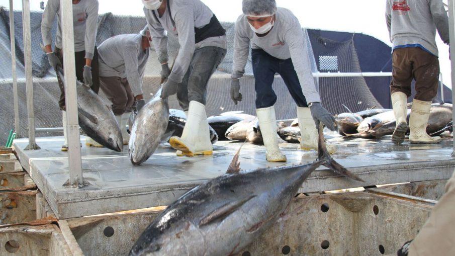 Crecen Anualmente Más De 10 Por Ciento Pesca Y Acuacultura En México En Los últimos Seis Años: SAGARPA