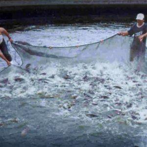 Promoverán A Campeche En Foro Económico De Pesca