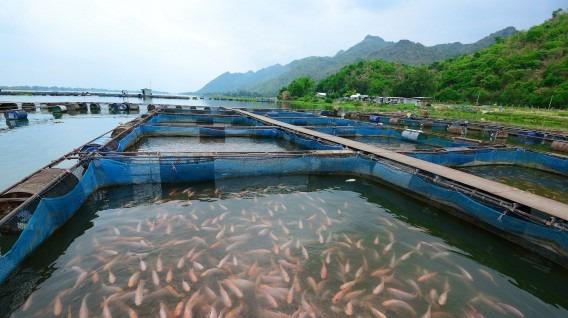 La Siembra De Peces En El Mar Garantiza Alimento En El Futuro