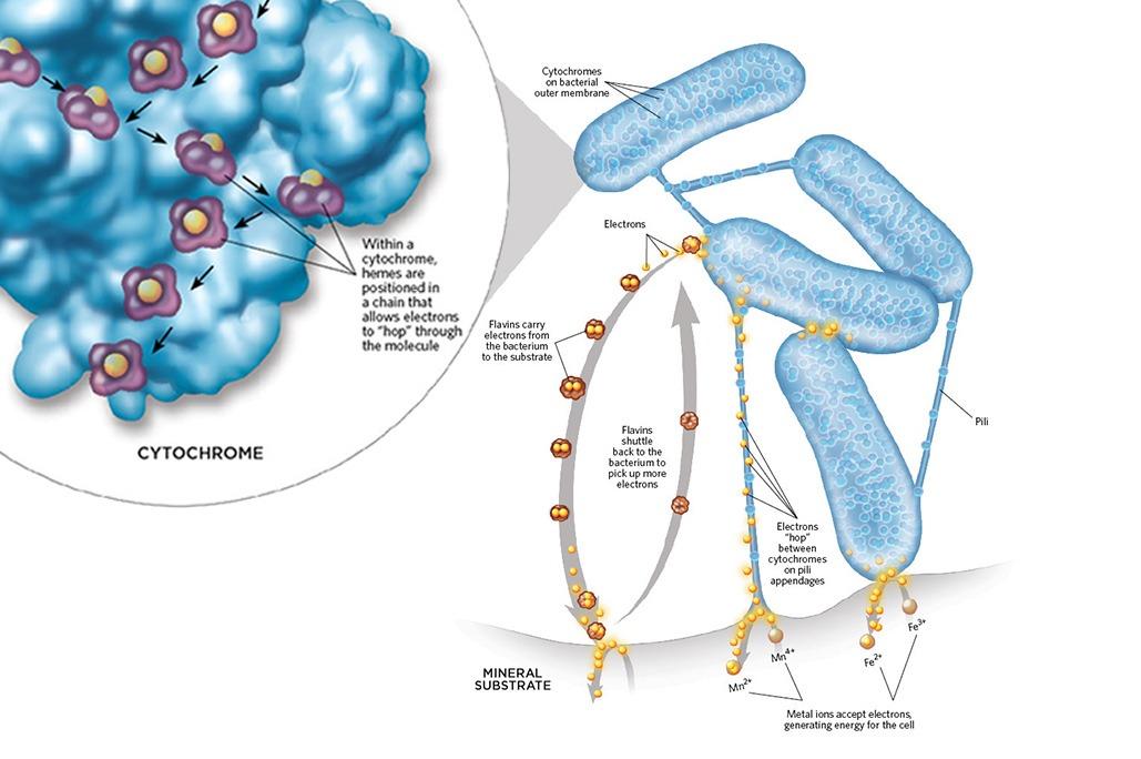Las Bacterias Y Los Minerales En Las Camaroneras De Baja Salinidad 2 1
