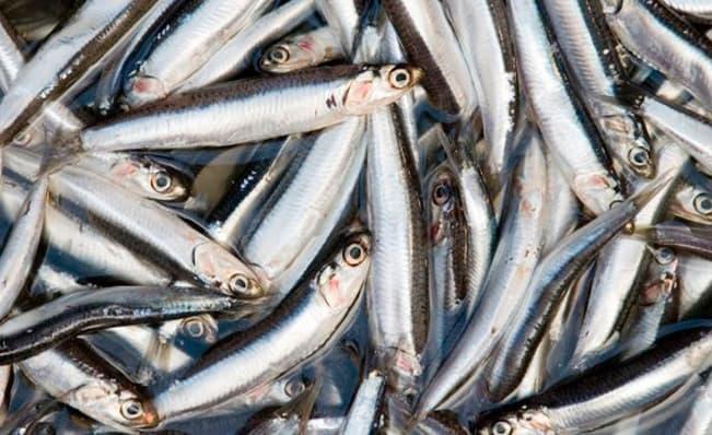 Foto Y Pie De Foto: Uun Buen Aporte, Estudiantes Investigaron Sobre Especies Marinas. Créditos: Cortesía.