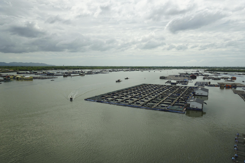 Jaulas Asia Aquaculture 0002