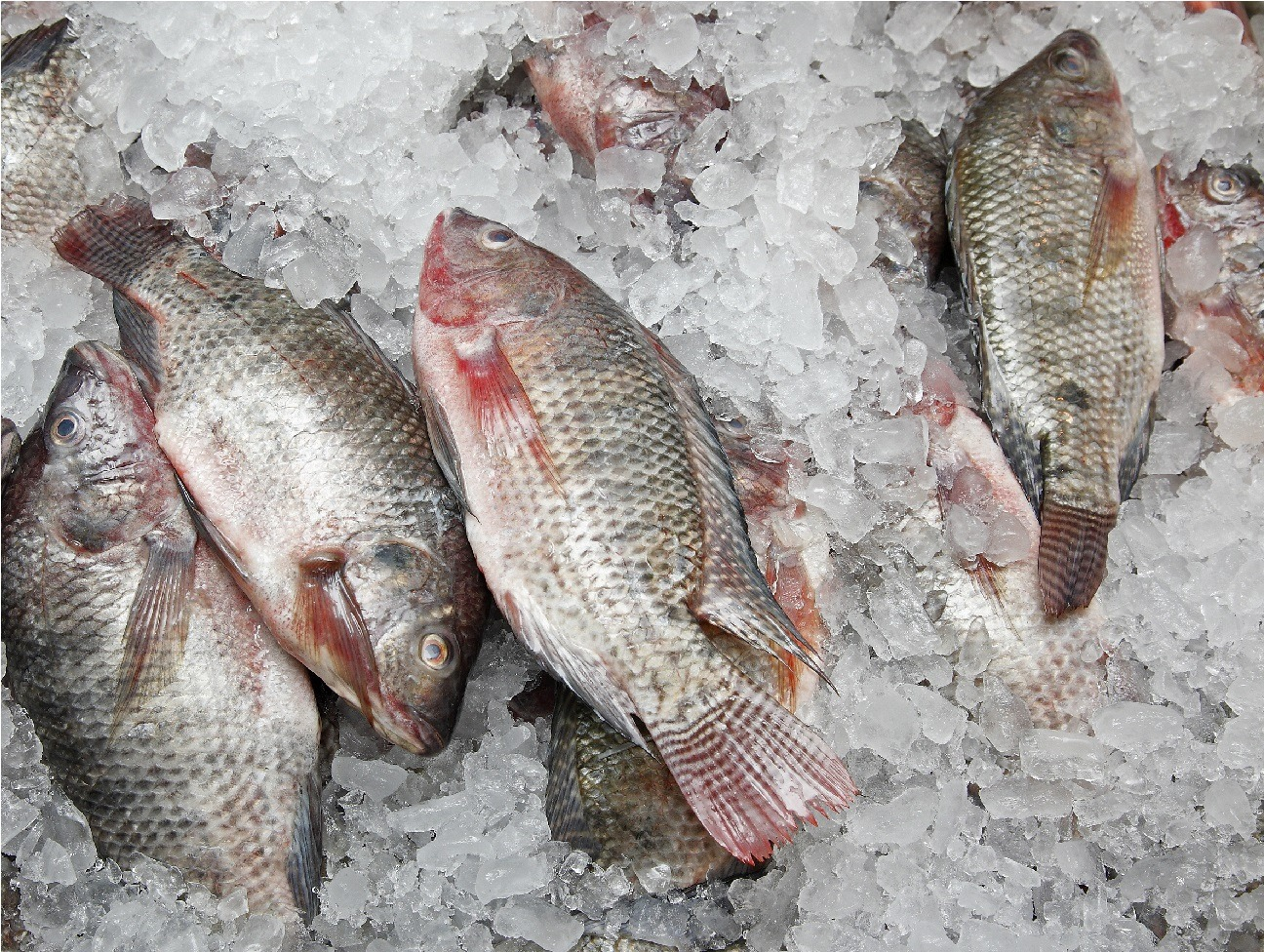 Fresh Fish In The Market.