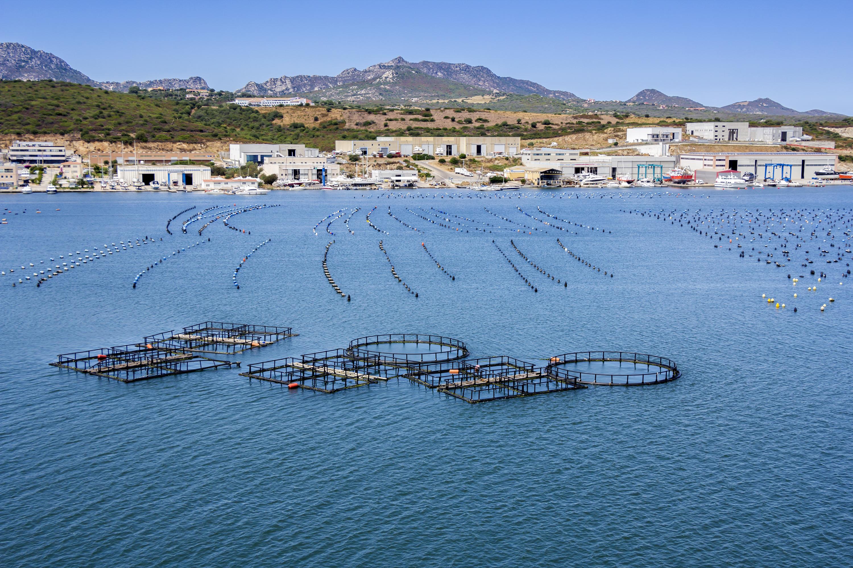 Impactos del COVID-19 en la pesca y acuicultura de la Unión Europea