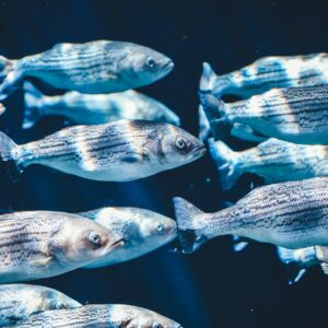 Proyecto acuícola-minero inició producción de especies marinas en costa de Taltal, Chile