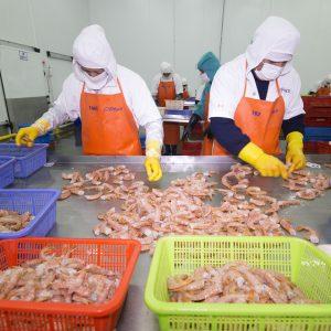 Organismo Nacional de Sanidad Pesquera de Perú desarrollará investigación de enfermedades en langostinos