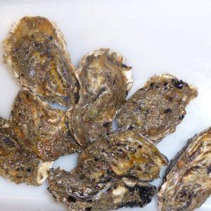 El IRTA investiga los mecanismos de resistencia antibiótica en las ostras