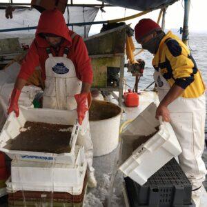 AquaPacífico y UCN buscan apoyar la sostenibilidad del cultivo de Ostión del Norte en empresas acuícolas de Tongoy